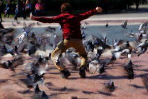 nuisance pigeons